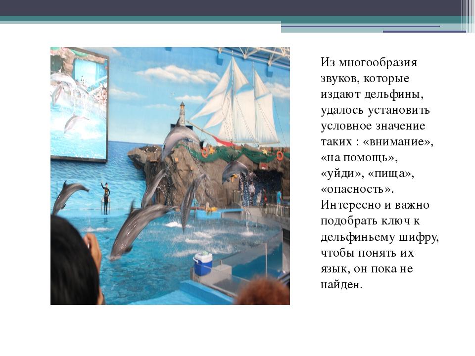 Из многообразия звуков, которые издают дельфины, удалось установить условное...