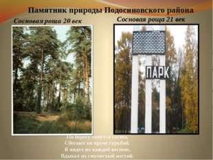 Памятник природы Подосиновского района Сосновая роща 20 век По берегу тянутся