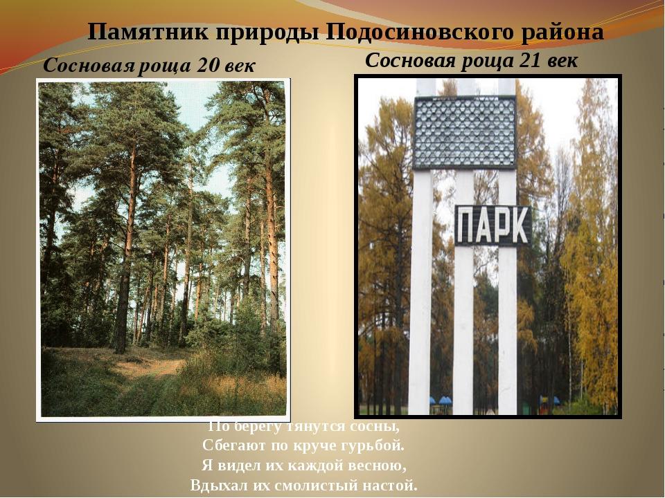 Памятник природы Подосиновского района Сосновая роща 20 век По берегу тянутся...