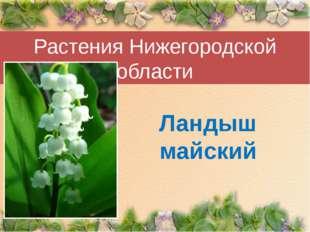 Растения Нижегородской области Ландыш майский