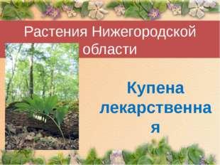 Растения Нижегородской области Купена лекарственная