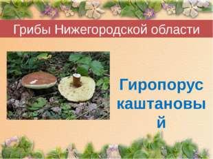 Грибы Нижегородской области Гиропорус каштановый