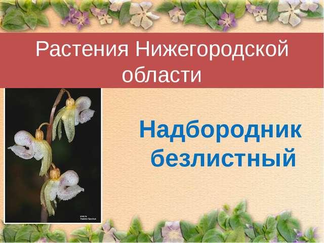 Растения Нижегородской области Надбородник безлистный
