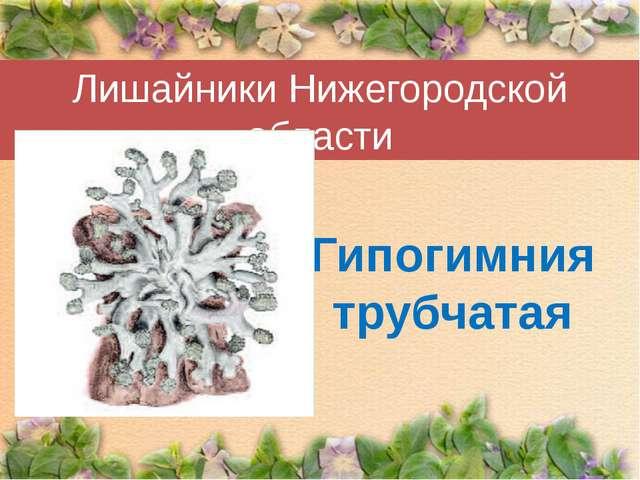 Лишайники Нижегородской области Гипогимния трубчатая