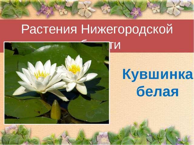 Растения Нижегородской области Кувшинка белая