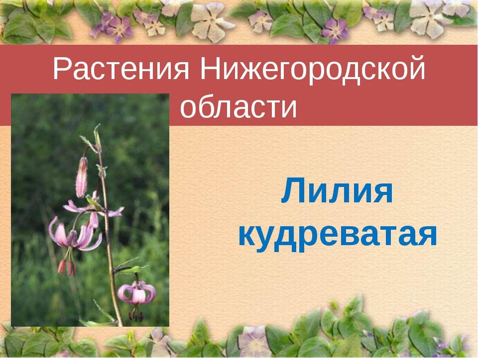 Растения Нижегородской области Лилия кудреватая