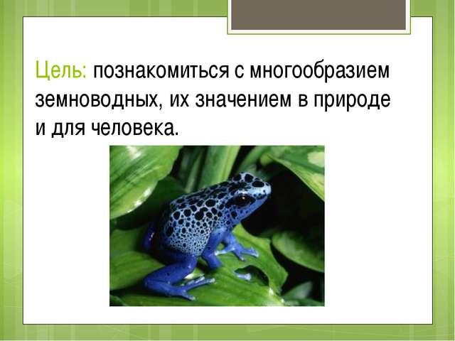Цель: познакомиться с многообразием земноводных, их значением в природе и для...