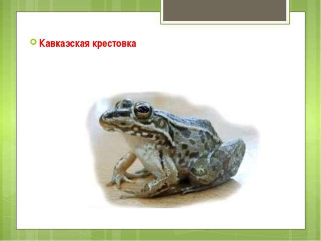 Кавказская крестовка