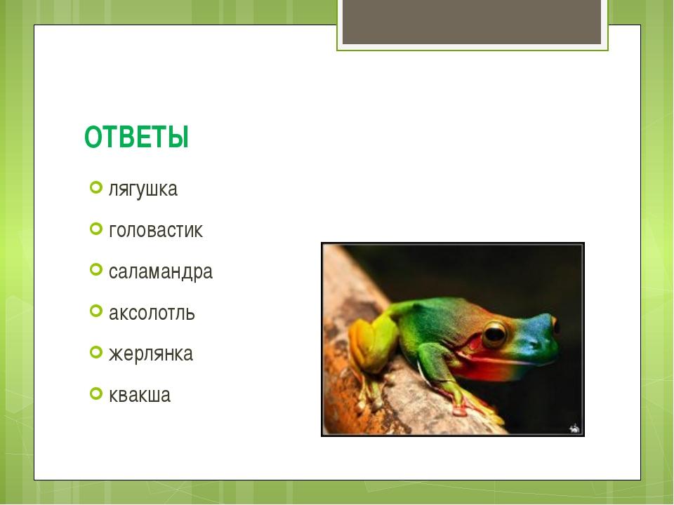 ОТВЕТЫ лягушка головастик саламандра аксолотль жерлянка квакша