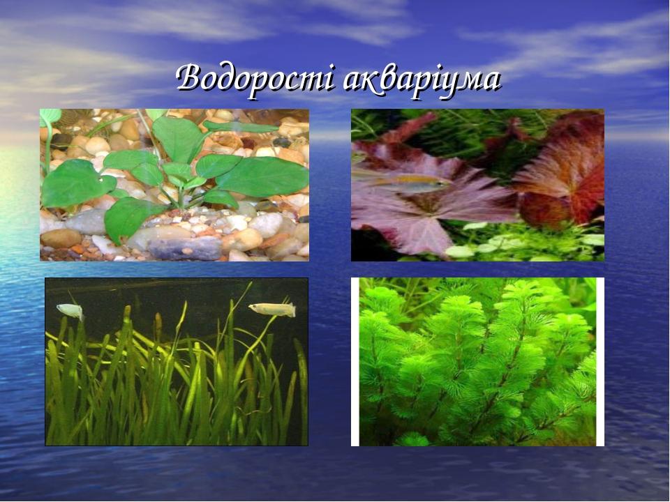 Водорості акваріума