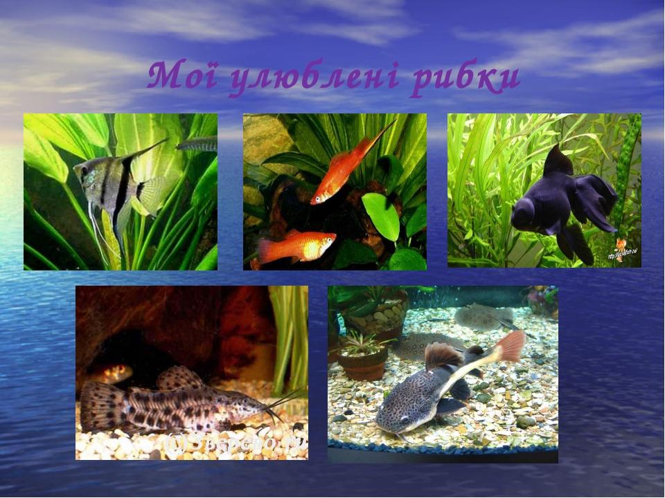 Мої улюблені рибки