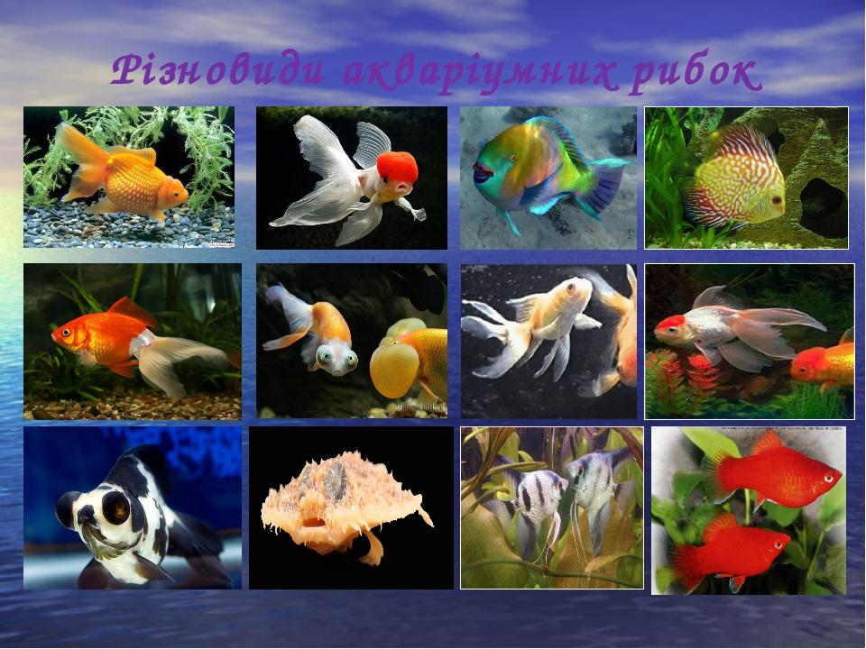 Різновиди акваріумних рибок