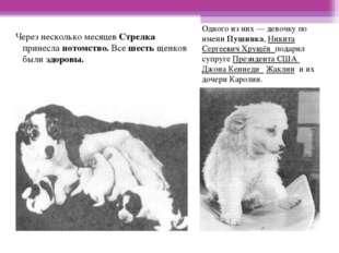 Одного из них— девочку по имени Пушинка, Никита Сергеевич Хрущёв подарил суп