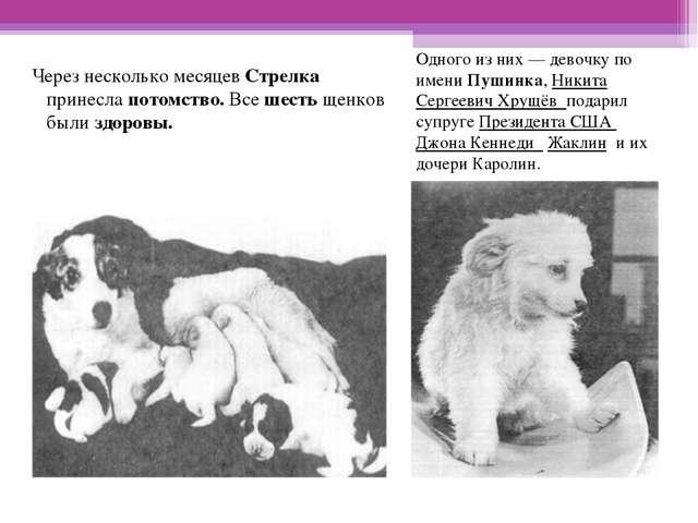 Одного из них— девочку по имени Пушинка, Никита Сергеевич Хрущёв подарил суп...