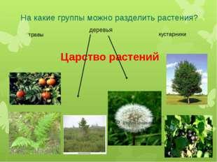 На какие группы можно разделить растения? Царство растений травы деревья куст