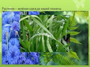 Растения – зелёная одежда нашей планеты