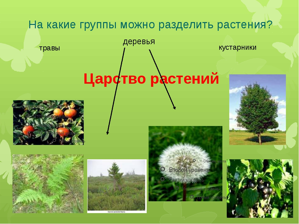 На какие группы можно разделить растения? Царство растений травы деревья куст...