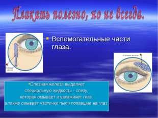 Вспомогательные части глаза. Слезная железа выделяет специальную жидкость - с