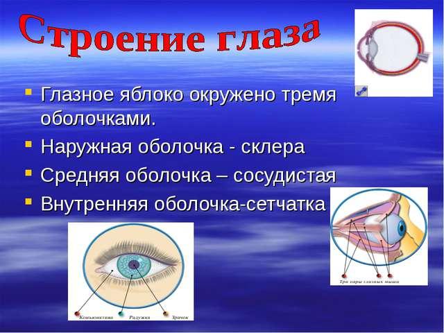 Глазное яблоко окружено тремя оболочками. Наружная оболочка - склера Средняя...