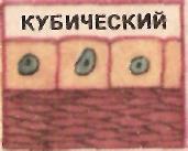 hello_html_11f95e11.jpg