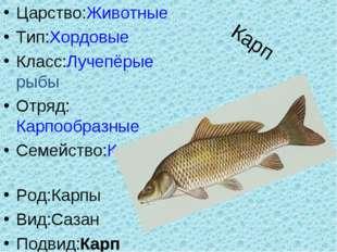 Карп Царство:Животные Тип:Хордовые Класс:Лучепёрые рыбы Отряд:Карпообразные С