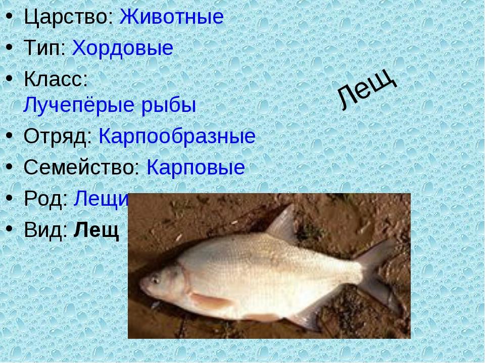 Лещ Царство:Животные Тип:Хордовые Класс:Лучепёрые рыбы Отряд:Карпообразны...