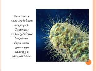 Ресничная палочковидная бактерия. Типичные палочковидные бактерии включают ки