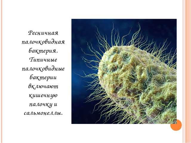 Ресничная палочковидная бактерия. Типичные палочковидные бактерии включают ки...