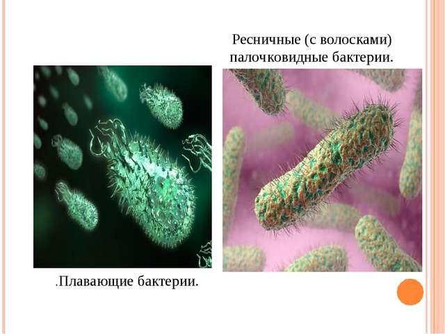 .Плавающие бактерии. Ресничные (с волосками) палочковидные бактерии.