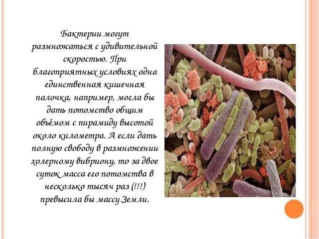 Бактерии могут размножаться с удивительной скоростью. При благоприятных услов...