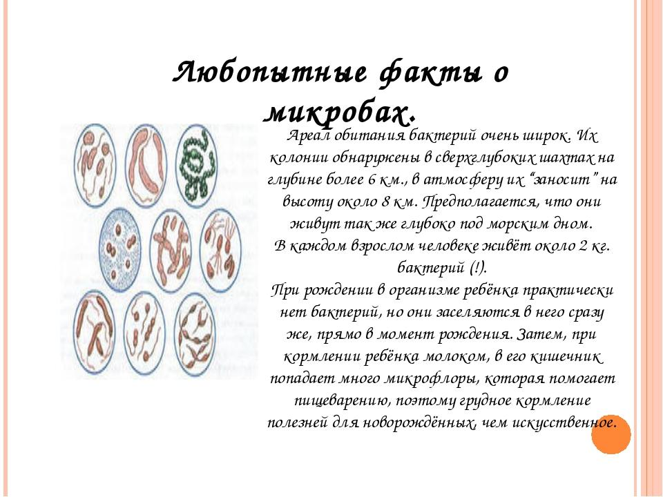 Любопытные факты о микробах. Ареал обитания бактерий очень широк. Их колонии...