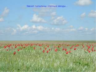 Звенят тюльпаны- степные звезды…