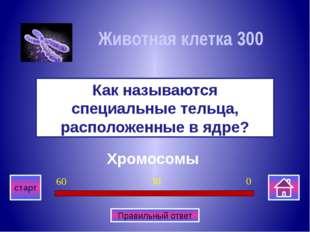 Грибницу Что образуют длинные вытянутые нити у грибов? Многоклеточные органи