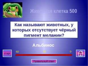 Медведь Какое животное изображено на гербе Пермкого края? Многоклеточные орг