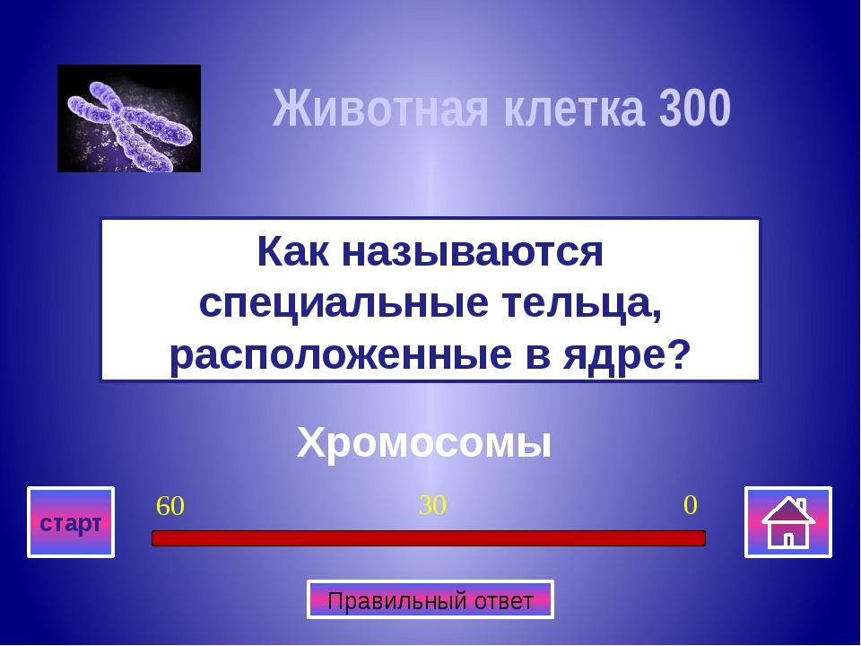 Грибницу Что образуют длинные вытянутые нити у грибов? Многоклеточные органи...