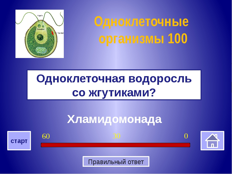 Бациллы Как называются палочковидные бактерии? Бактерии 200 0 30 60 старт Пр...
