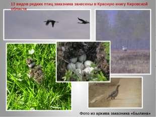 Фото из архива заказника «Былина» 13 видов редких птиц заказника занесены в К