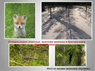 Фото из архива заказника «Былина» 19 видов редких животных заказника занесены
