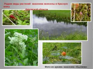 Фото из архива заказника «Былина» Редкие виды растений заказника занесены в К