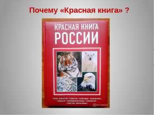 Почему «Красная книга» ?