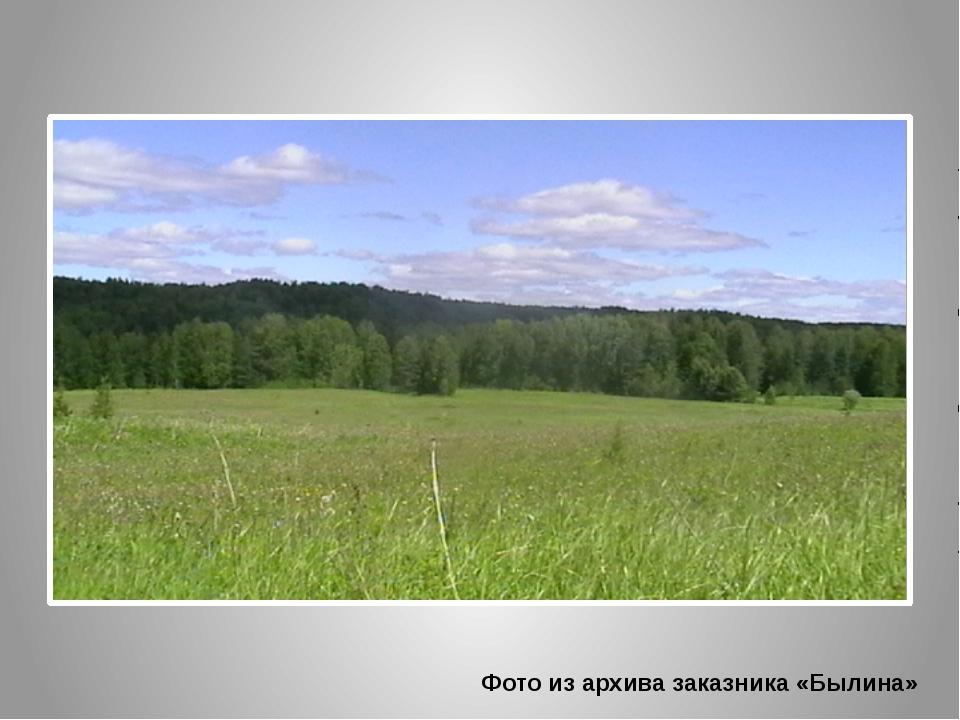 Фото из архива заказника «Былина»