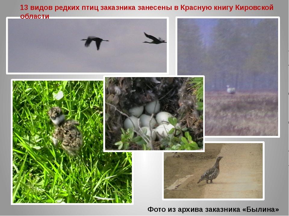 Фото из архива заказника «Былина» 13 видов редких птиц заказника занесены в К...