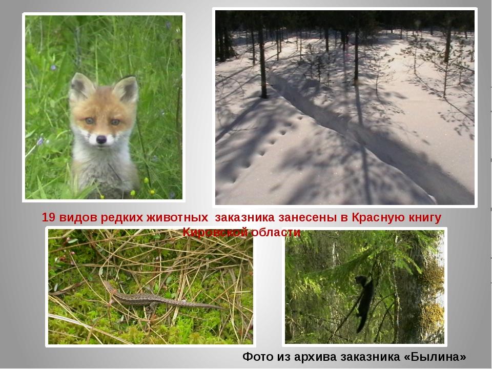 Фото из архива заказника «Былина» 19 видов редких животных заказника занесены...