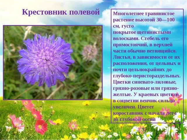 Крестовник полевой Многолетнее травянистое растение высотой 30—100 см, густо...