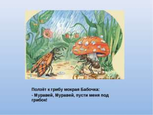 Ползёт к грибу мокрая Бабочка: - Муравей, Муравей, пусти меня под грибок!