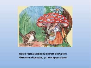 Мимо гриба Воробей скачет и плачет: Намокли пёрышки, устали крылышки!