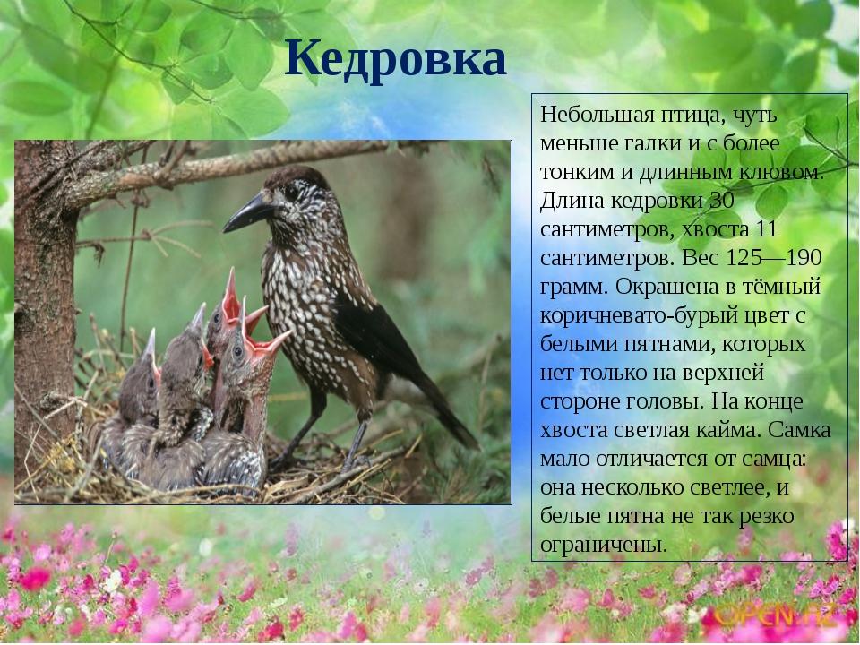 очень романтичный картинки птиц сибирских лесов с описанием сожалению, вашему запросу