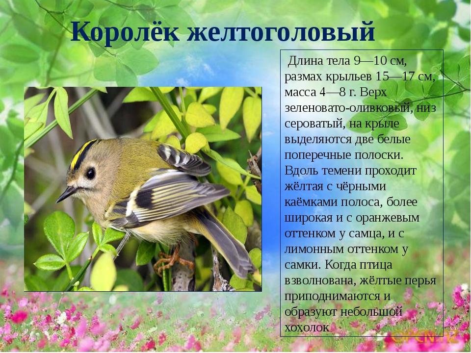 идет фото и рассказы о птицах брежневой веры