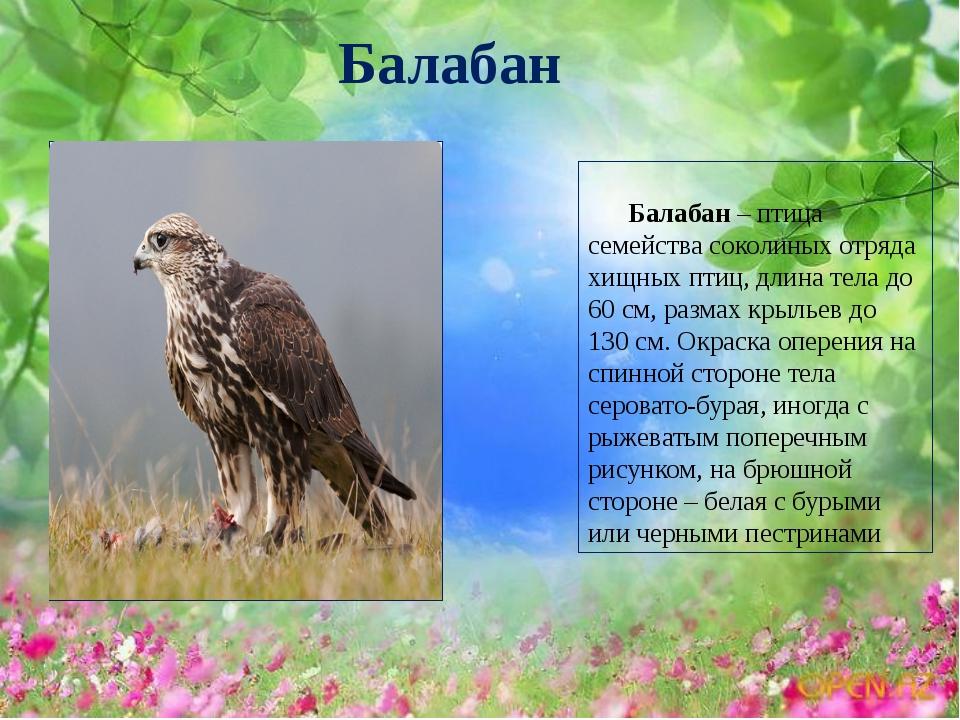 кальсоны этих какие птицы обитают в алтайском для малышейCуществует мнение
