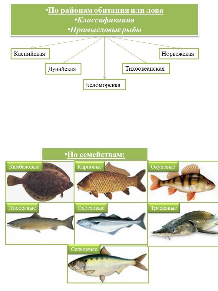 Промысловые рыбы 2 - копия